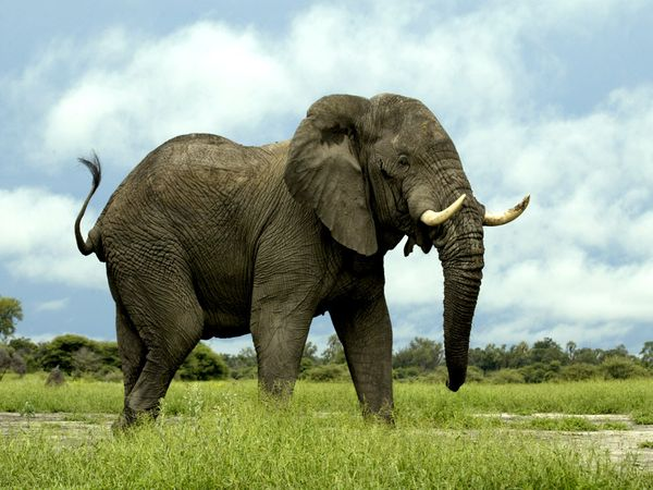 Grab the Elephant: 3 Critical Components of Successful Support Raising